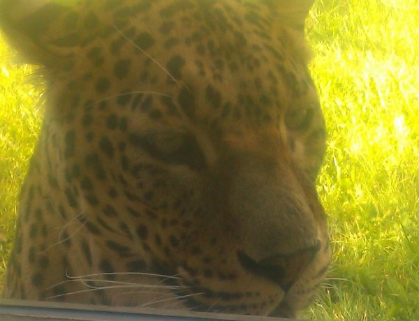 inNorfolk   Bank Holiday Blog: Banham Zoo, Norfolk