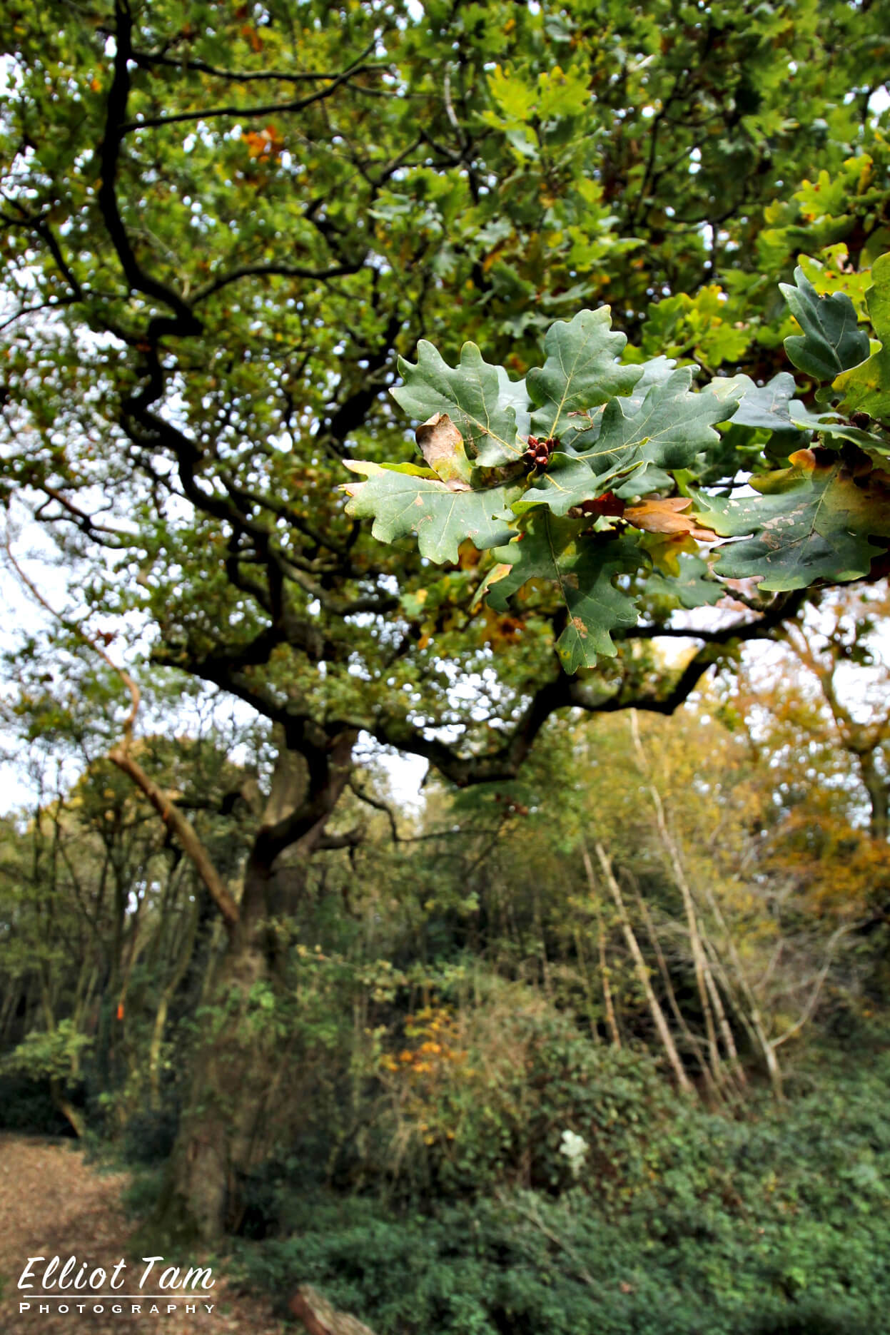Leaves in a Norwich Nature Reserve