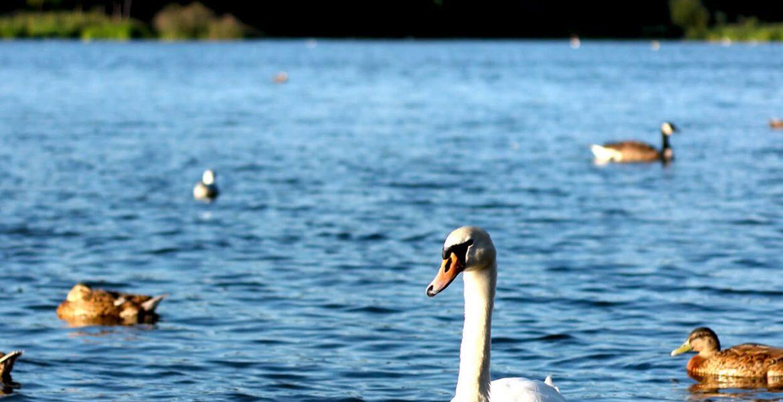 Whitlingham Country Park by Norfolk Photographer Elliot Tam