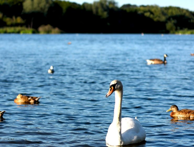 Whitlingham Country Park by Norfolk Photographer Elliot Tam